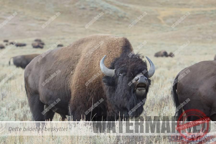 Yellowstone2016-00003