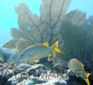 Dykking - Florida Keys